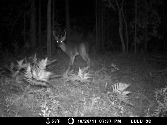 South Carolina Whitetail-11-4-11-002.jpg