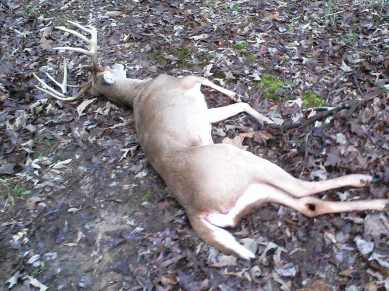Holiday Buck-1228110803.jpg