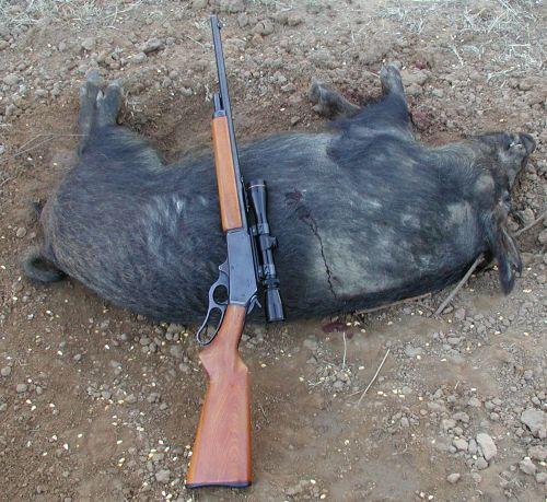 Pig-ology-3030pig.jpg