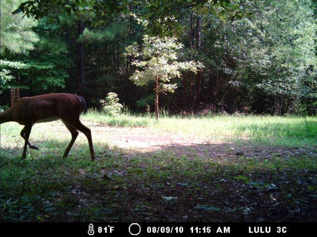 Game Cam from last few weeks.-8-13-10gc-009.jpg