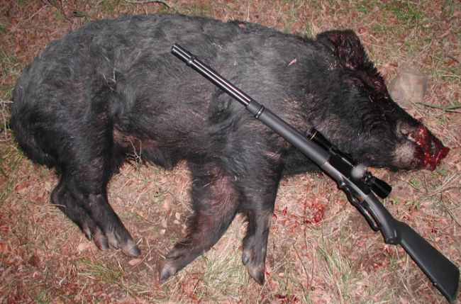 Winchester or Marlin????-bigpig.jpg
