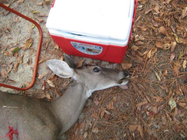 Pig Pen Deer-deer3c1009pig-pen-002b.jpg