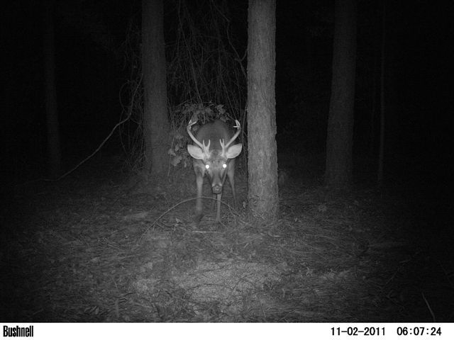 South Carolina Whitetail-devil-deer.jpg