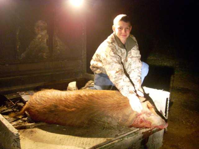 son's first bull-dscn0237-reeds-hog.jpg