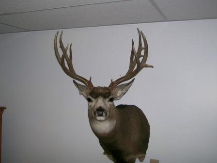 Mount from Taxidermist-grandfather-buck.jpg