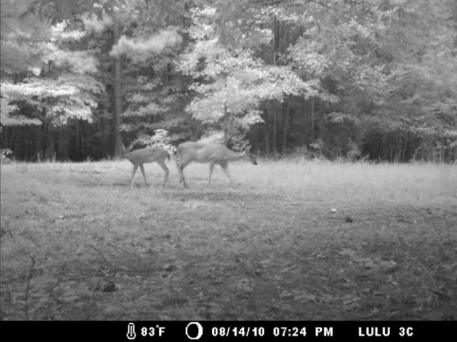 Game Cam from last few weeks.-home8-20-10gc-002.jpg