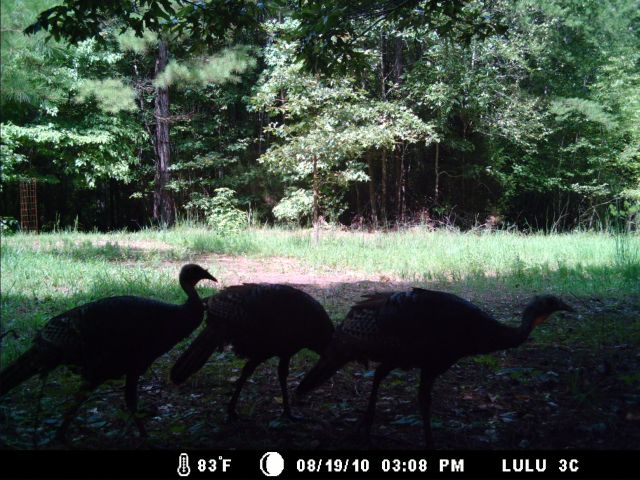 Game Cam from last few weeks.-home8-20-10gc-012.jpg