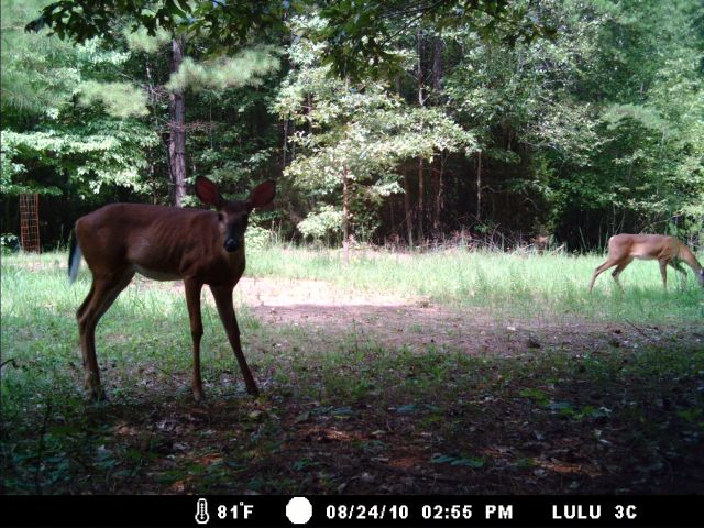 Game Cam from last few weeks.-home8-28-10gc-007.jpg