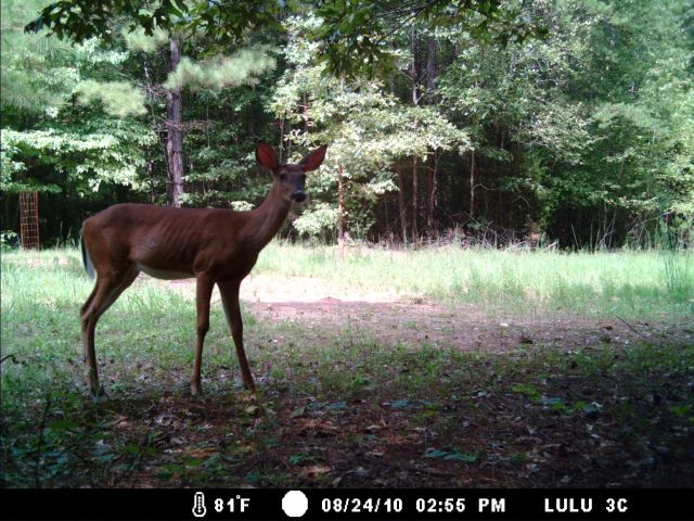 Game Cam from last few weeks.-home8-28-10gc-008.jpg
