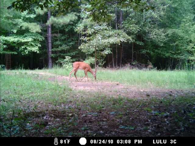 Game Cam from last few weeks.-home8-28-10gc-010.jpg