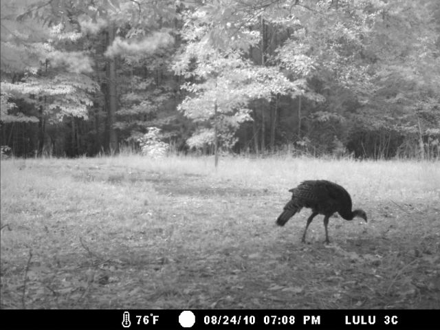 Game Cam from last few weeks.-home8-28-10gc-011.jpg