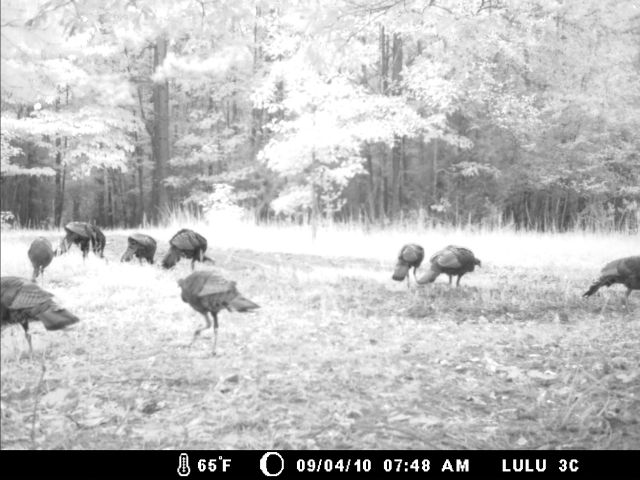 Game Cam from last few weeks.-home9-5-10gc-025.jpg