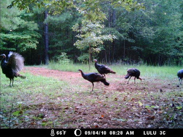 Game Cam from last few weeks.-home9-5-10gc-028.jpg
