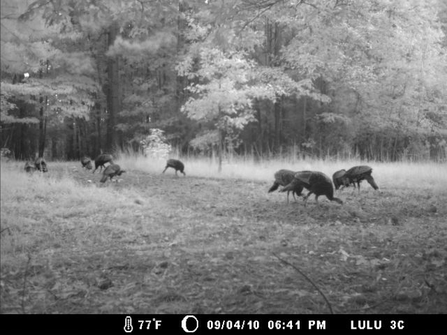 Game Cam from last few weeks.-home9-6-10gc-002.jpg