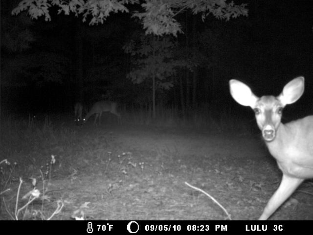 Game Cam from last few weeks.-home9-6-10gc-003.jpg