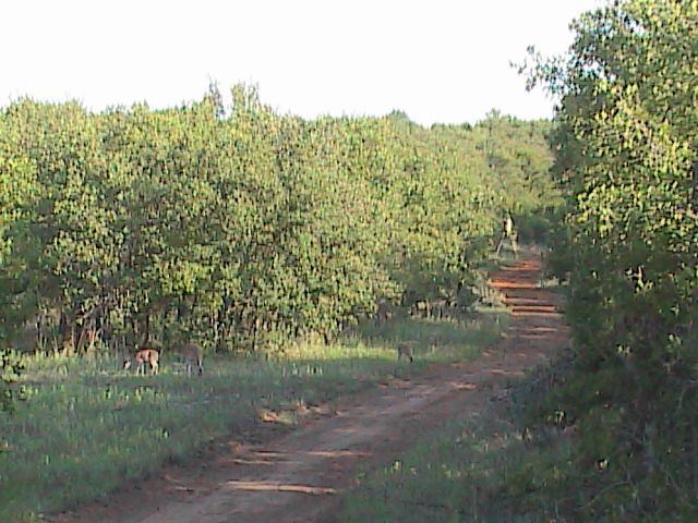 dove season/pigs-hpnx0053.jpg