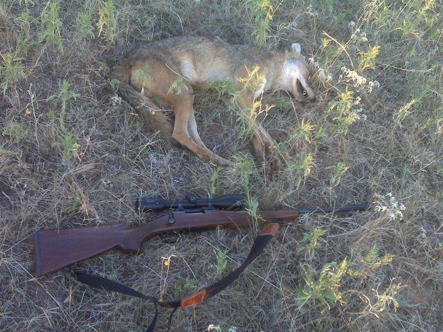 22/250/dead dog-img00343.jpg