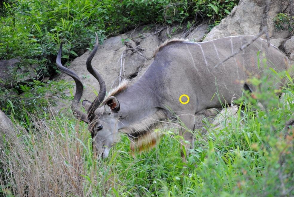 for elk hunters - Shooters Forum