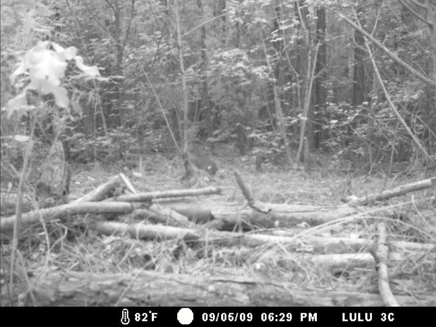 Identify this animal-lulu91209-001w.jpg