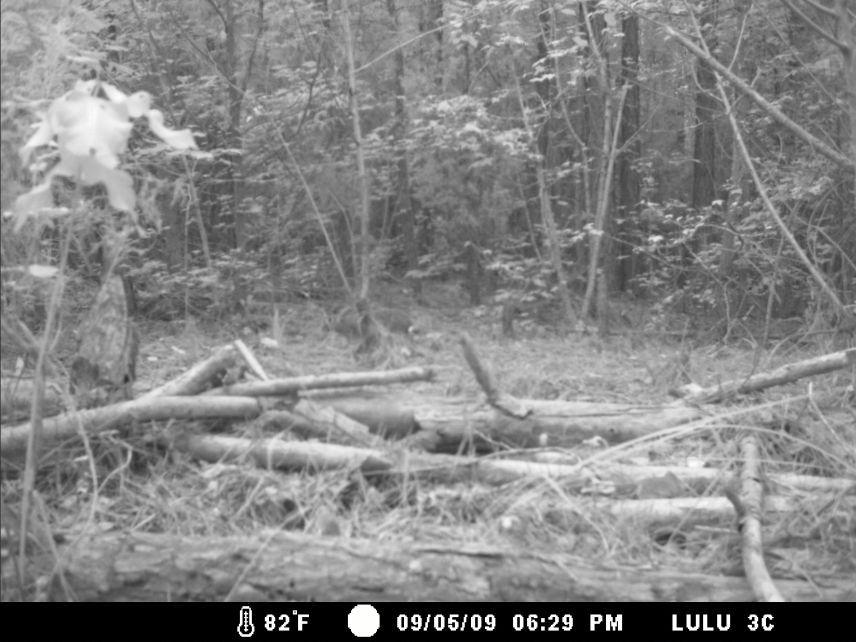 Identify this animal-lulu91209-002w.jpg