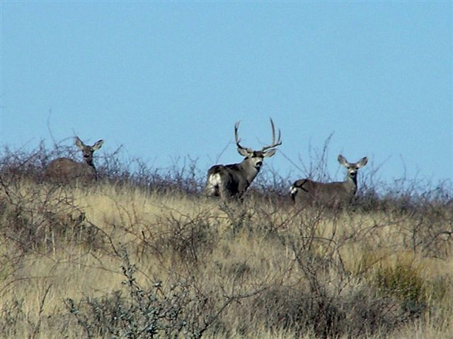 Muley Pics and Stories-newyrsday%2520003%5B1%5D.jpg