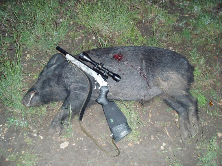 Calif pig hunt-p1010143.jpg