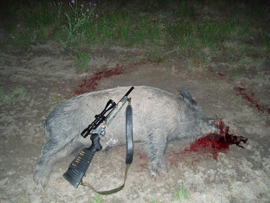 375 jdj for hogs-p1010150.jpg