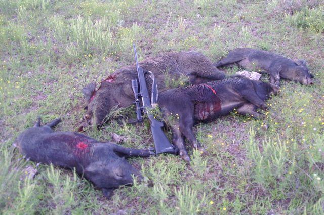dove season/pigs-pict0294%5B1%5D.jpg