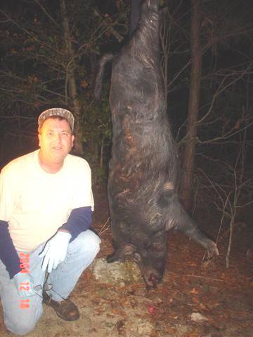 How dangerous are feral pigs?-pigenhanced1.jpg