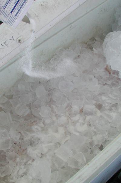 Pig-ology-salt2.jpg