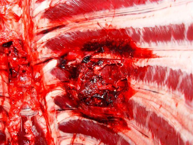 45 70 deer whitetail entry rem 405g effects bullet internal