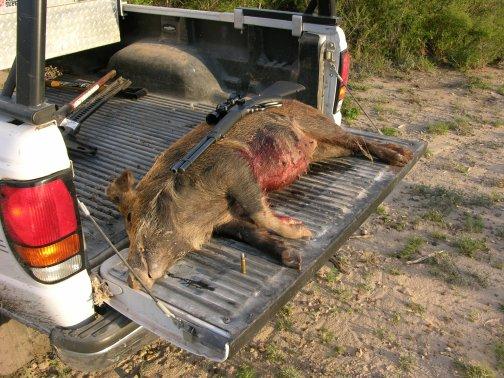 375 Brown Whelen-tilden_truck_pig.jpg