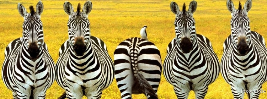 What's so hilarious?-zebras3.jpg